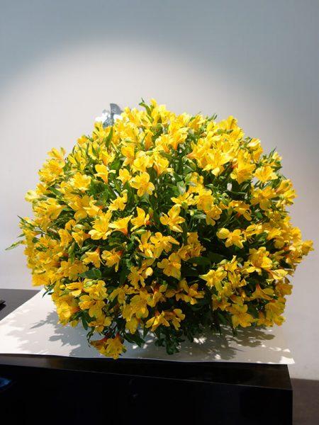 福岡花屋の高級生花アレンジメント