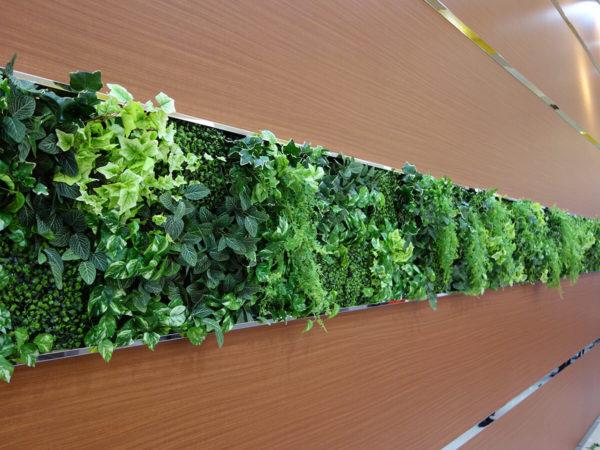 壁面緑化 福岡市中央区けやき通り花屋BAROQUEバロック