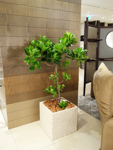 福岡の観葉植物