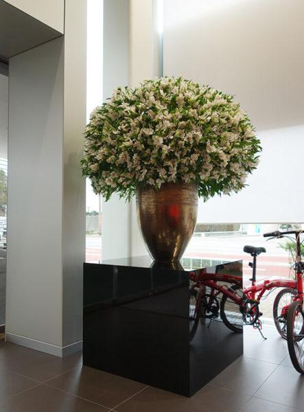 アウディショールームの花