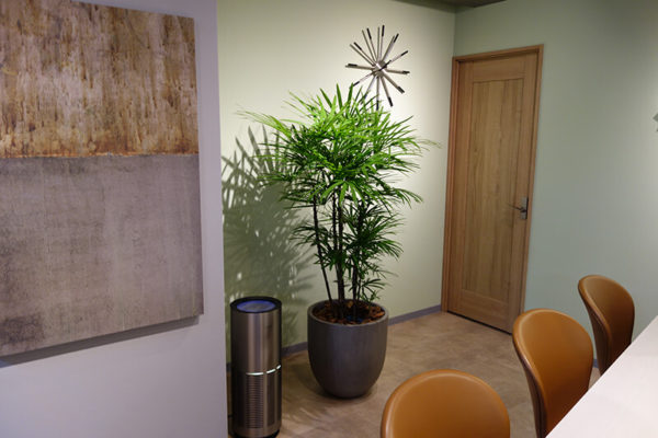 観葉植物シュロチク
