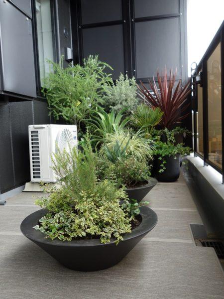 ベランダに置いた植物